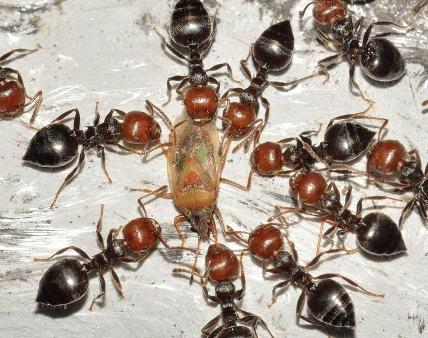 ant-563287_1280